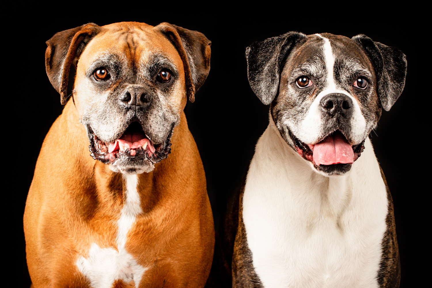 two dogs looking into the camera during a dog photography shoot