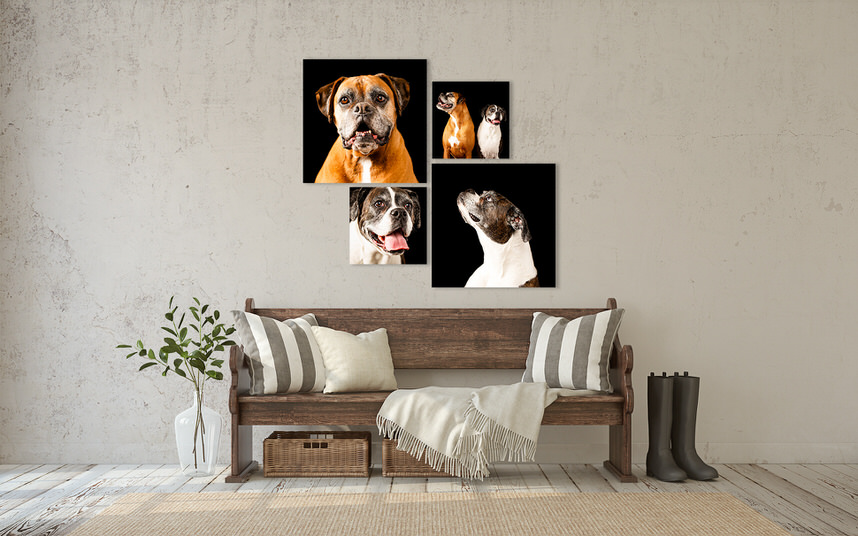 Fur-baby portrait photograph of two dogs on a wall
