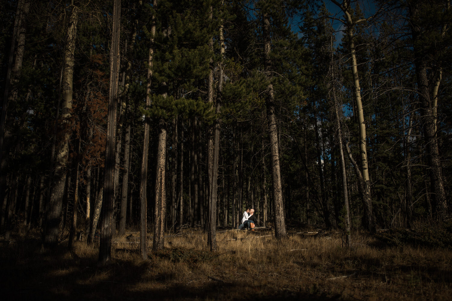 A photograph in Banff National Park with a couple within trees holding each other